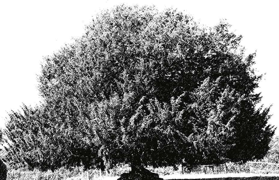 Imagen destacada blanco y negro jesuscastanon.com